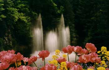 The fountain at Butchart Gardens