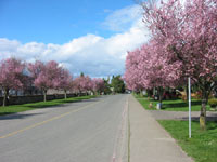 Beautiful street walk in Spring